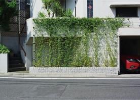 壁面緑化でつくる、潤いある住まいの顔