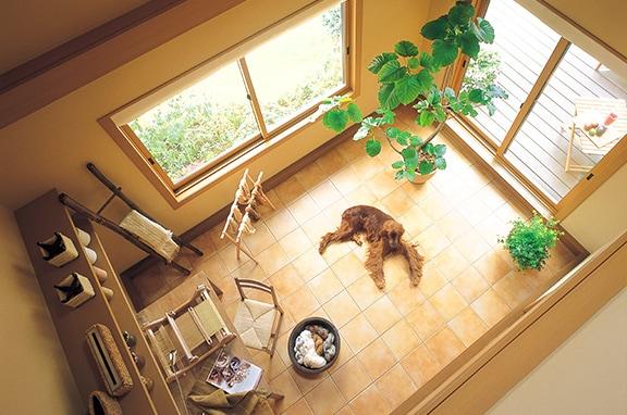 室内飼いで急増する 家庭内での事故を防ぐ